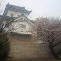 挙母城(挙母城と桜4)