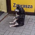 Photos: 犬の座り方
