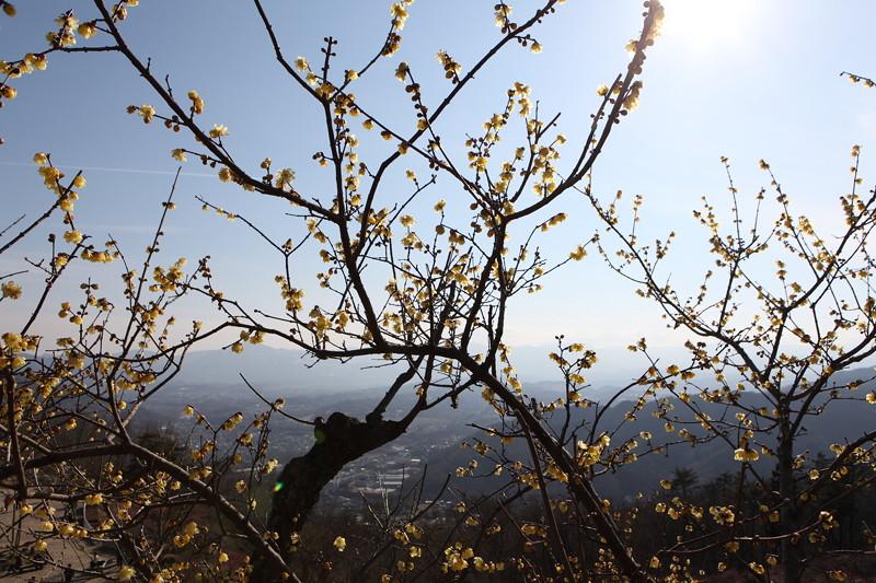 IMG_1164宝登山と蝋梅