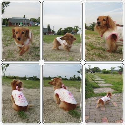20110606 お散歩
