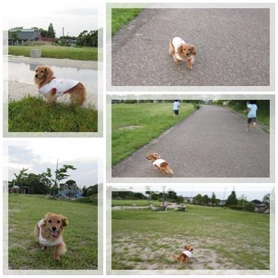 20110623 お散歩1