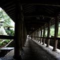 長谷寺 新緑と登廊