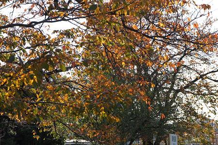秋のステンドグラス