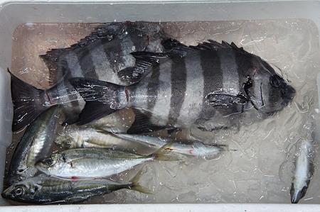 地のお魚たち