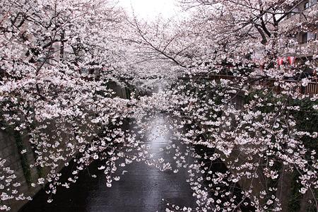目黒川(1)