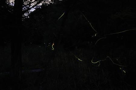 ホタル観賞2010 in月夜野_20100704-201105