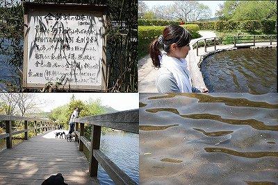 写真: 金鱗湖