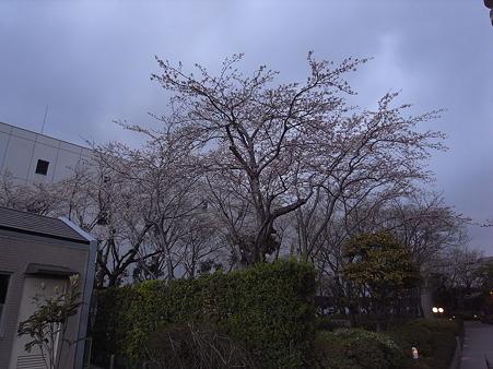 南千住の桜 2010-4-3 24