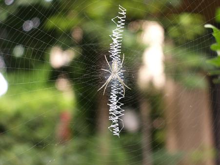 20050619蜘蛛の巣