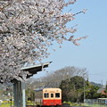 写真: 小湊鉄道の桜 2010 02