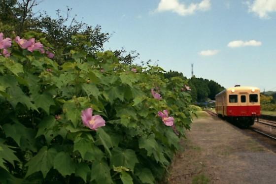 写真: 秋の小湊鉄道2010 03