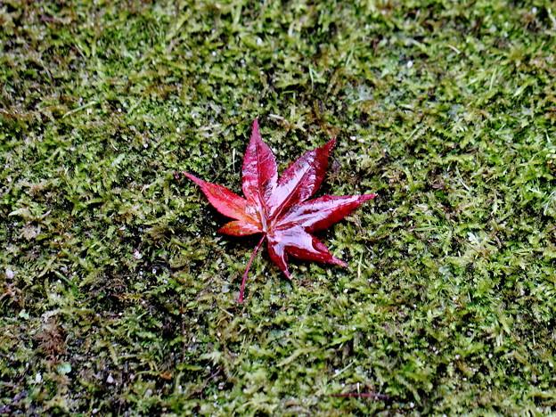 京都にて紅葉の落ち葉です。